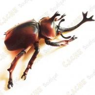 """Cache """"Inseto magnética"""" - Grande besouro rinoceronte"""